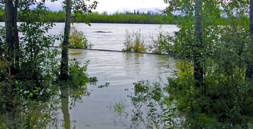 How Long Can Trees & Palms Survive Flooding & Heavy Winds Before Injury Results?