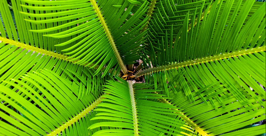 Palm Problems and Disorders