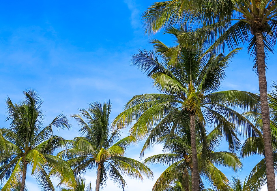 Advanced Tree & Palm Care With Trunk Injections