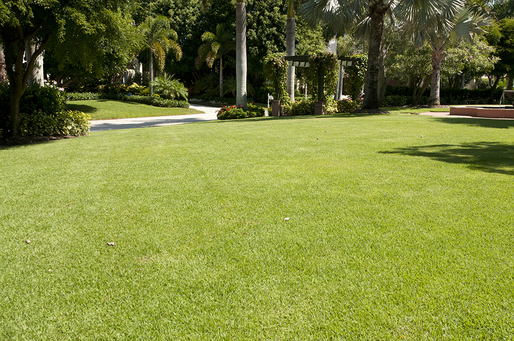 Turf And Lawn Care In Sarasota Fl